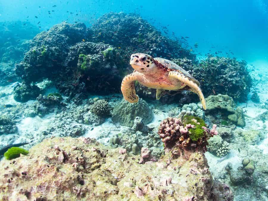 Dove fare snorkeling in Thailandia: le migliori spiagge