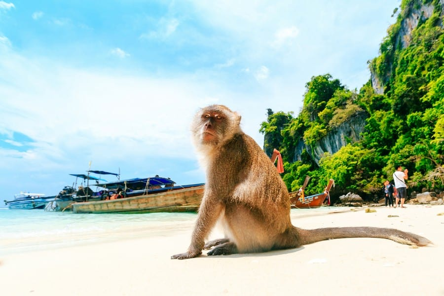 La spiaggia di Monkey Beach, Phi Phi Island