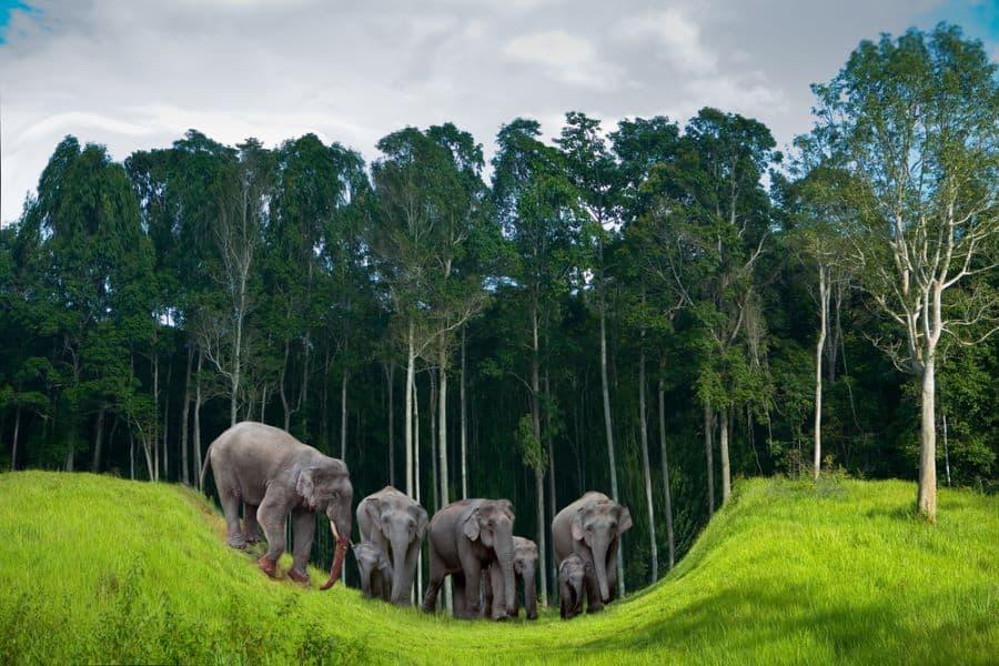 La riserva degli elefanti di Koh Chang